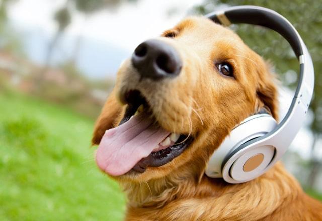 musica-para-animais-piano-class